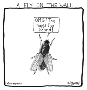 fly-on-wall
