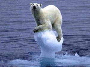 polar-bear-ice